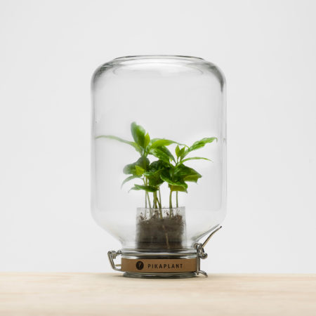pikaplant-jar-coffee-plant-in-ecosphere-01