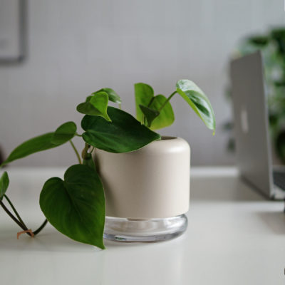 Geo H2O self watering plant pot