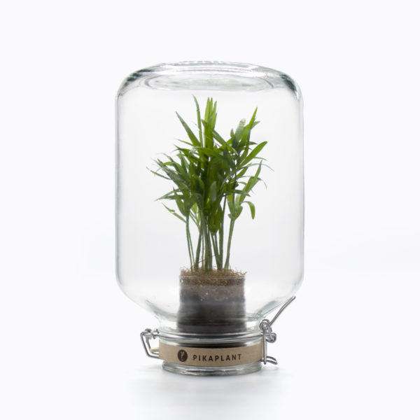 self-sustaining plant in a closed terrarium