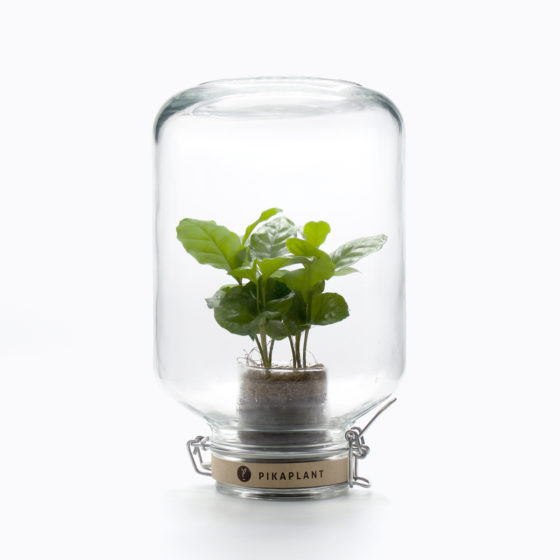 coffee plant ecosphere