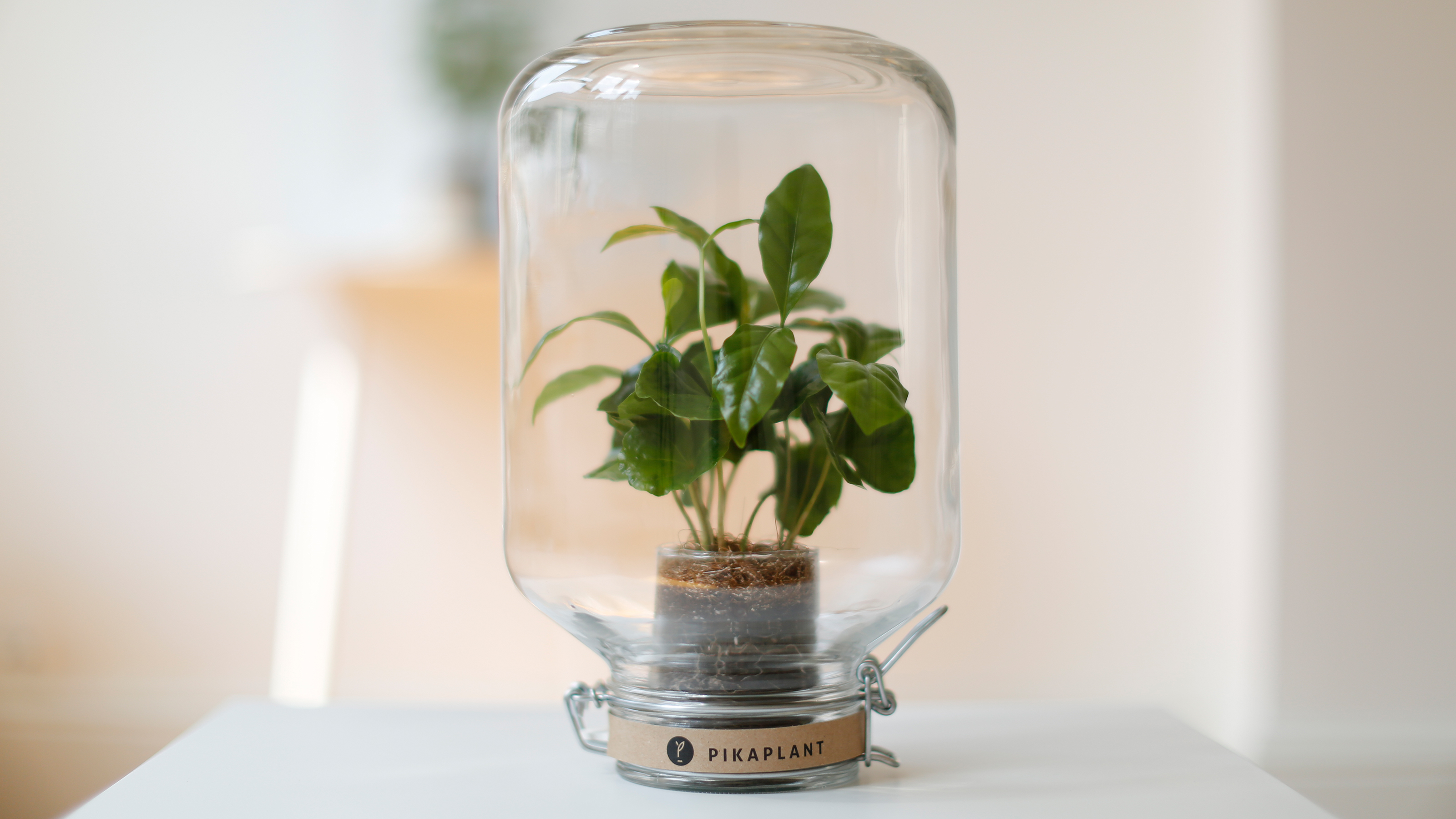 Pikaplant Automatic Plant Watering Inspired By Nature